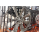 COMPRESOR 100 L. 2,75HP. MONOFASICO